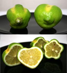 ハート形レモン